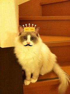 つくね王子.jpg